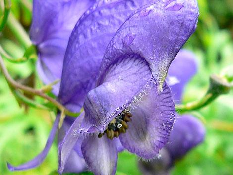十大最危险植物  - 雪梅 - 梅雪争春