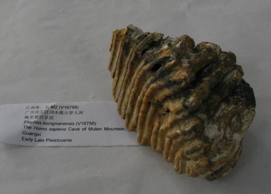 广西崇左发现11万年前早期现代人下颌骨男鞋童鞋,化石,女鞋图片