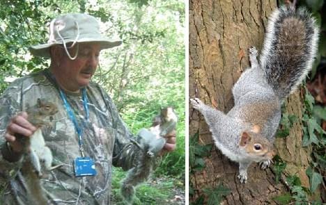 十大臭名昭著入侵物种:灰松鼠