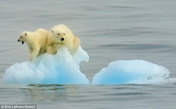 北极熊恐龙被困海冰在海上漂流.年级变暖的母子!四后果绘画全球图片