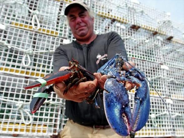 鲜亮的蓝色让它们更易被食肉动物发现并捕猎