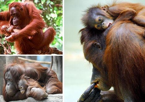 十个最伟大动物母亲