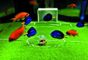 头球是鱼类在球场上的一种进攻手段