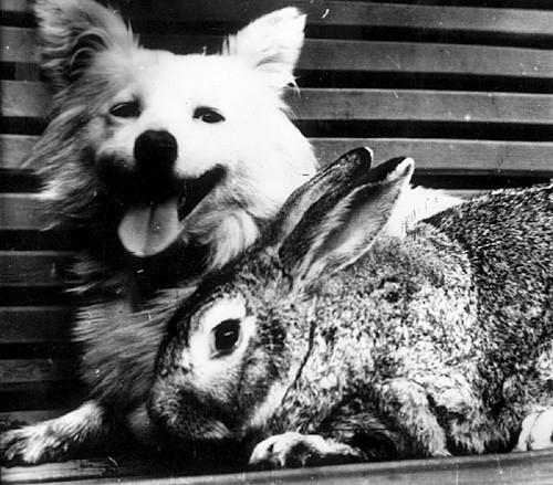 同入太空的狗与兔子