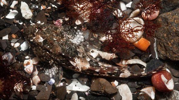 在天空岛,这只海蝎子利用岩石池子伪装自己