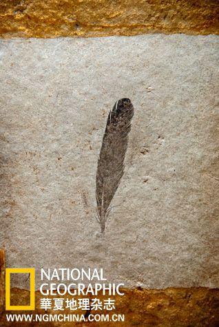 1861年发现于德国某个采石场的这一件有1.5亿年历史的化石样本,引发了一场至今未能盖棺定论的热议