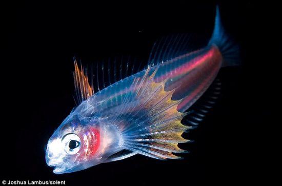 海洋生物绚丽X光照:染色体反射自然颜色