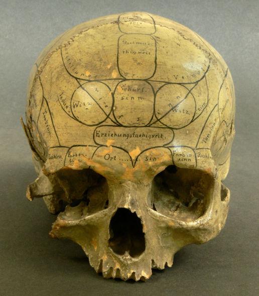 颅相学家标志的一个人头骨