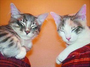 第四名:Casey and Sassy,在Youtube的访问超过34,000,000次。