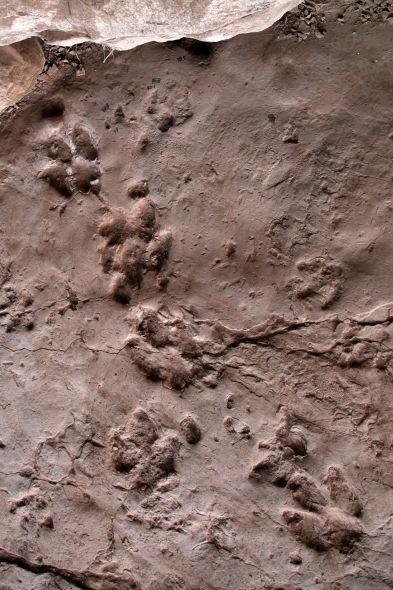 莲花保寨地面的恐龙足迹