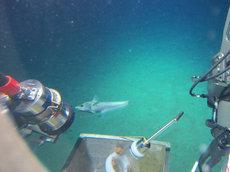 5057米海底的鱼