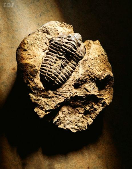 对于生物学家来说,外星人的模样可以在地球记录中找到原型:肢体分节的三叶虫化石