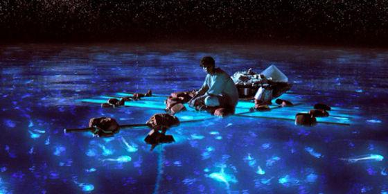 会发出荧光的水母也有很多种