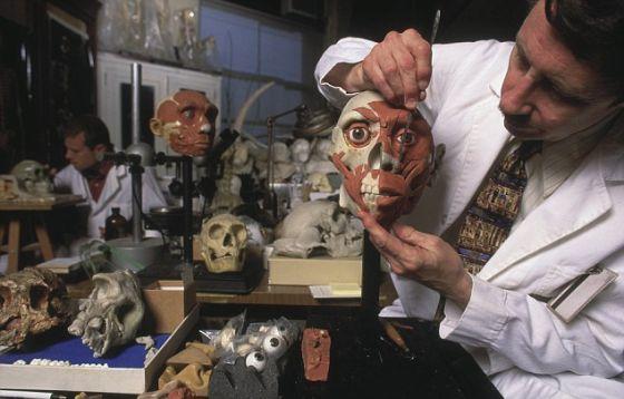"""美国自然历史博物馆的科学家正将""""肌肉""""添加到北京猿人面部模型上"""