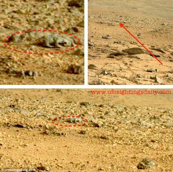 一位视觉敏锐的科学博客写手称,他发现一条蜥蜴在火星上漫步。