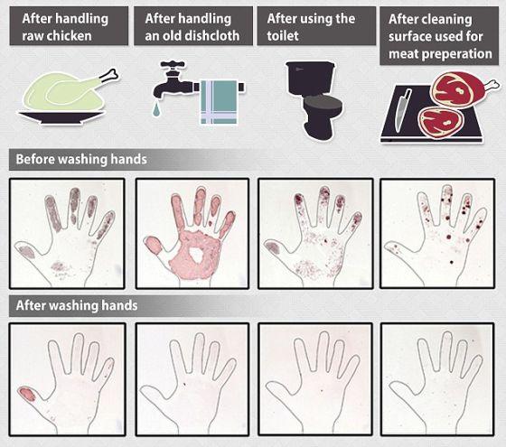 这些照片还强调了只是借助肥皂和水就可轻易去掉大多数虫子。尽管正确洗手没有杀死全部细菌(照片显示),但这样做会大幅减少污染物。