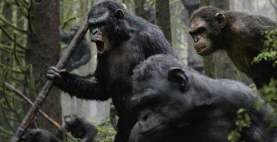在美国科幻大片《猩球黎明》中,猿族首领凯撒甚至会说英语。凯撒是一只突变异种的黑猩猩。
