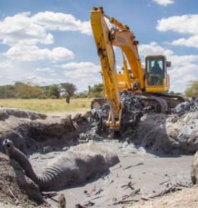 肯尼亚大象陷泥坑挖掘机相救