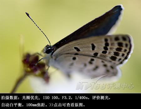 轻巧营造柔美宾得100mm微距镜头评测(5)