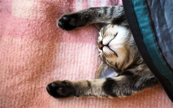 春困、秋乏、夏打盹,睡眠是人的基本生理需求之一,动物也不例外。微软近日发布一款Windows 7、Windows 8免费官方主题:《沉睡的小猫咪》(Sleepy Kittens),夏季来了,看看这些可爱的小家伙睡不醒的样子吧。   该主题共包含13张高清壁纸,分辨率为1920x1200。   官方下载: