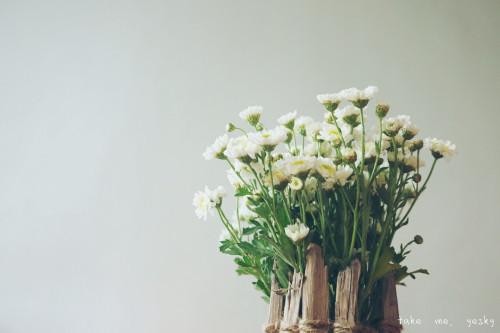 甜点小剧场――花とアリス的下午茶