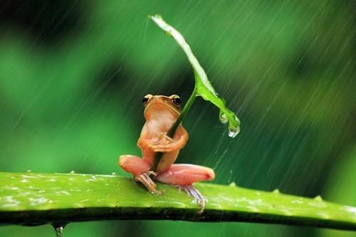 黑暗的生态摄影 揭露小动物的残酷真相图片