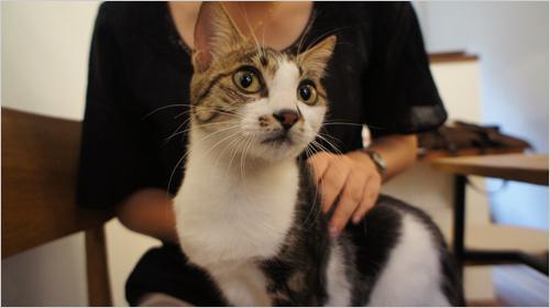 小猫单调可爱头像