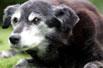 最长寿的狗