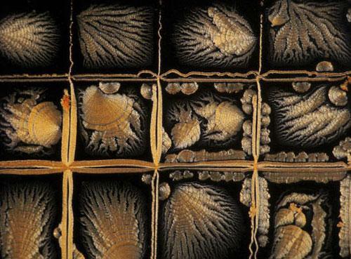 英国生物医学图片奖揭晓:冰糖上的苍蝇入选