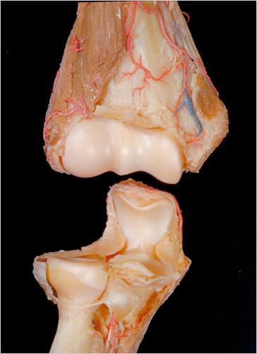 迄今最详细人体解剖照片:切成两半的脊柱