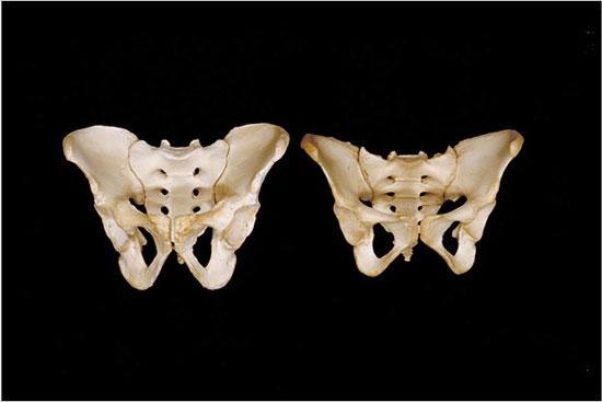 迄今最详细人体解剖照片:洋葱状的眼珠