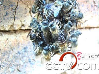 CCTV《走近科学》6月30日-7月6日节目预告