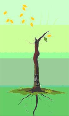 9、解释:黄叶配青果,只要根深就无防,感情平平