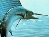 四种鱼孕期千万可别吃