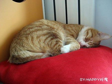组图:猫日记我困了想睡觉(2)