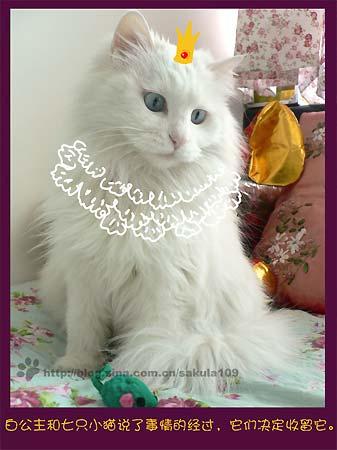 经典搞笑猫咪童话剧之白雪公主上集    版权所有,如需转载,请与
