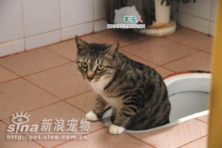 参赛作品wc的天才猫(组图)(2)