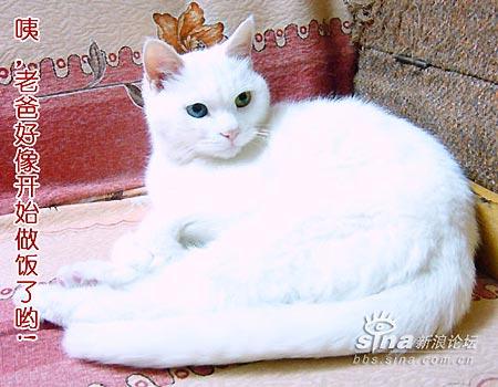 这样算来,娇猫去世的时候相当于人139岁,真是快成猫精了.