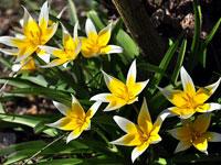 瑞士植物园的灿烂春光