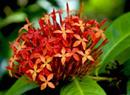 夏威夷:花园岛里赏园林