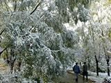 齐齐哈尔飘舞的十月雪