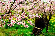 广西:桂林春