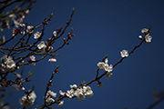 云南:旱季花开