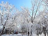 朝阳:雪后初霁北京变北平