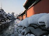 海淀:红墙碧瓦雪攀枝