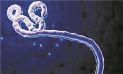 中国人为什么对埃博拉漠不关心?