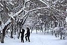 黑龙江:雪中漫步