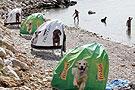 宠物狗专属海滩