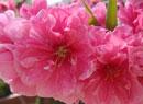 幸福之花:春色满园