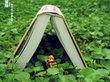 拿什么拯救你,阅读